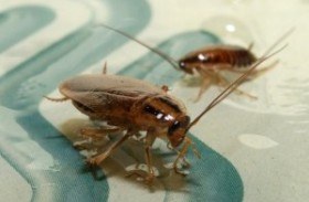 Q: How Do I Deal With A Cockroach Problem?